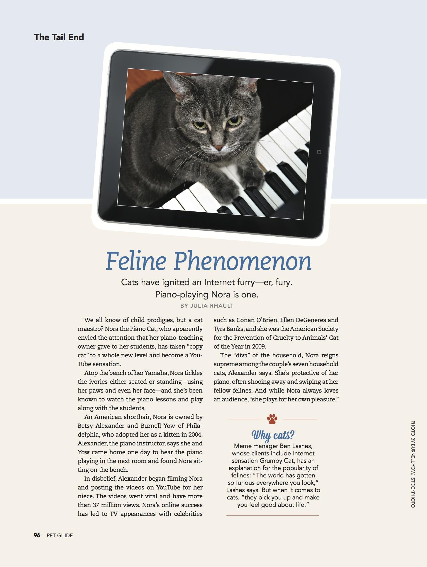 PET GUIDE_page96 Feline Phenomenon